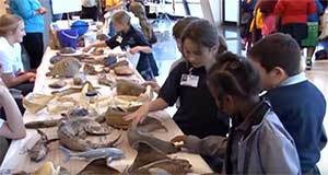 Discovery Hall Programs takes part in Louisiana Sea Grant's 'Ocean Commotion'