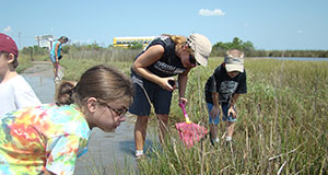 Celebrate National Estuaries Day with a trip to the salt marsh