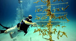 Boardwalk Talk: Impact of Growing Corals